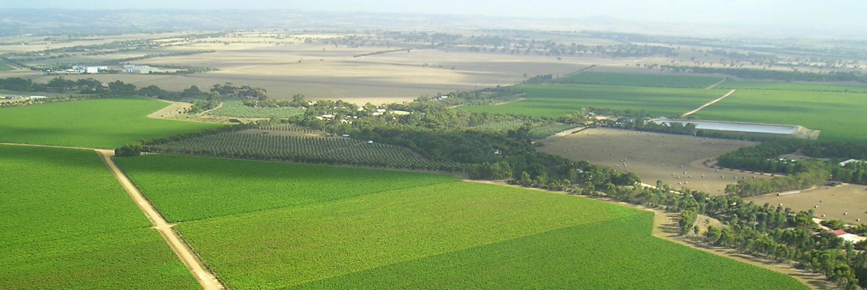CMV-Farms-Grapes.png